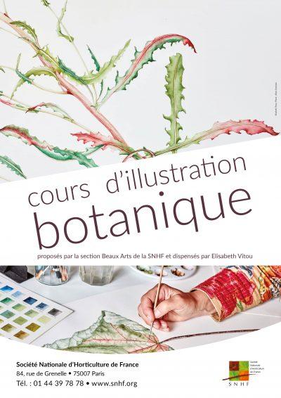 Illustration botanique SANS DATE